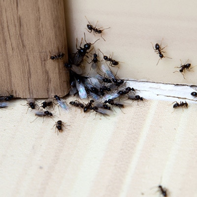 Ant Control Products