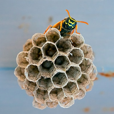Wasps, Hornets & Bees Control Products