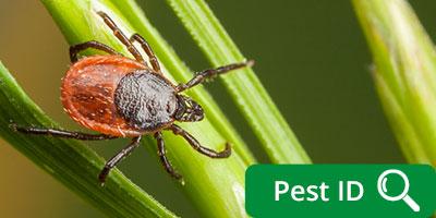 Blood Feeders ticks mosquitoes