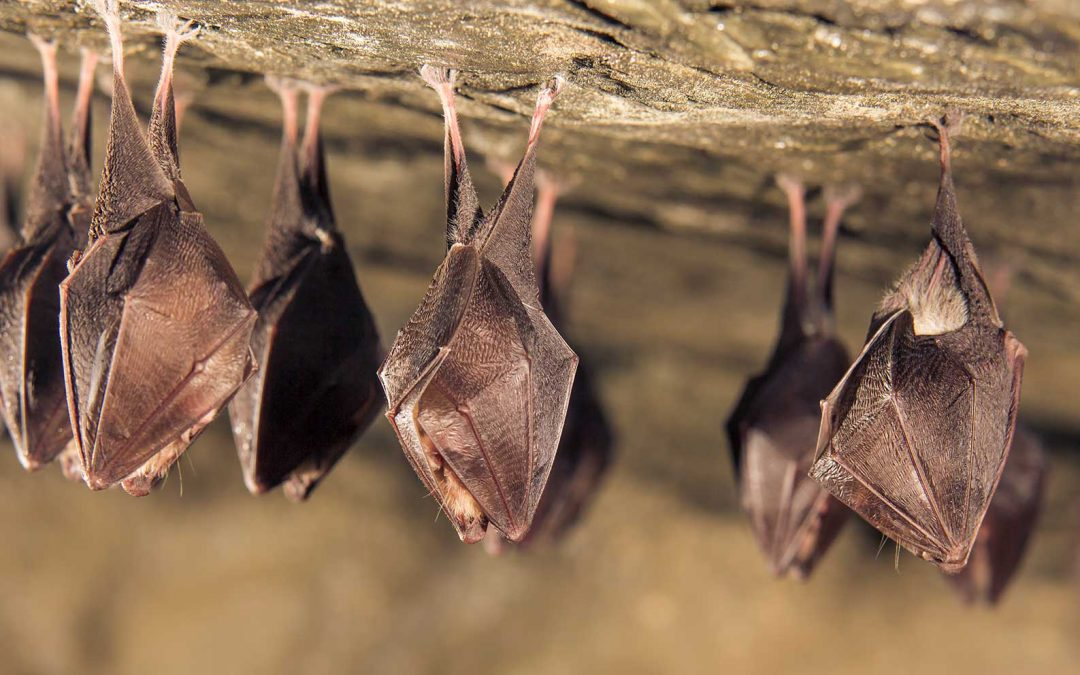 Bat Exclusions