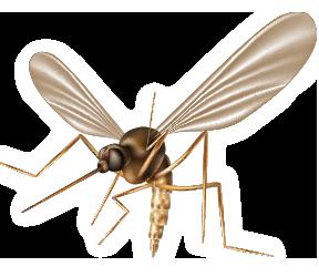 Mosquito & Tick season is upon us!