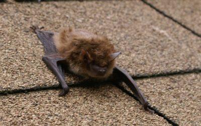 Don't let Bats Drive you Batty!